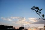 Sonnenuntergang über den Wiesen bei Borgsum